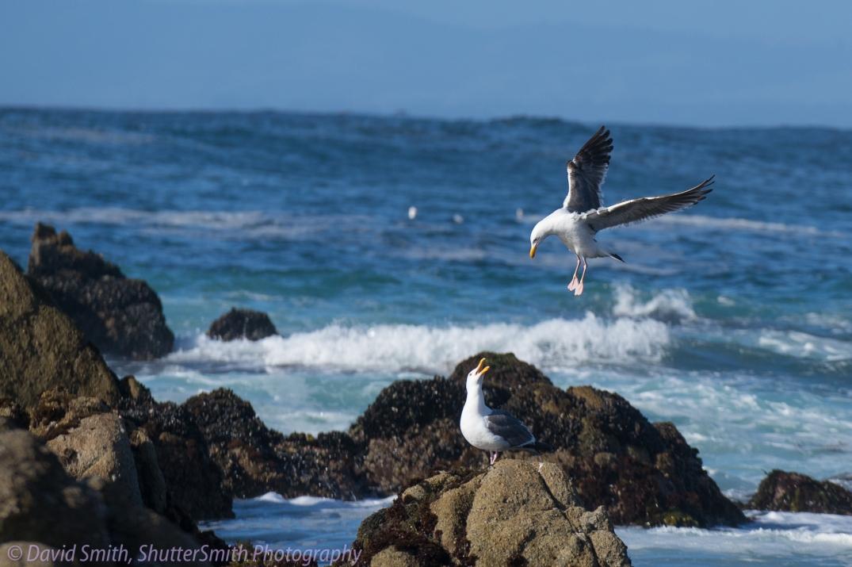 Birding-08002