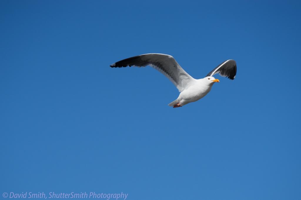 Birding-08006
