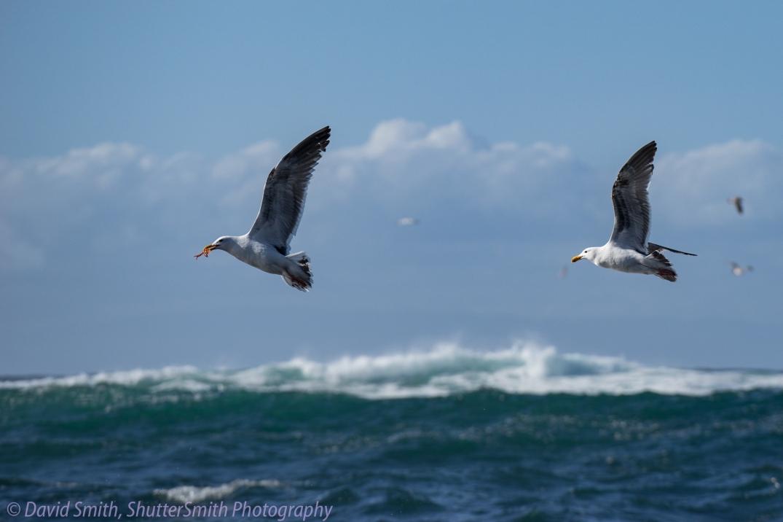 Birding-08009