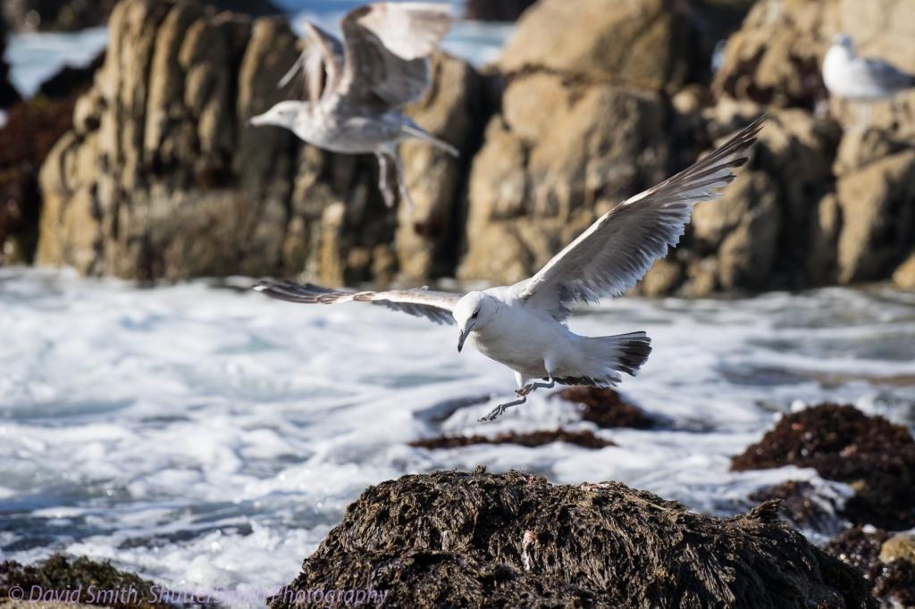 Birding-08010
