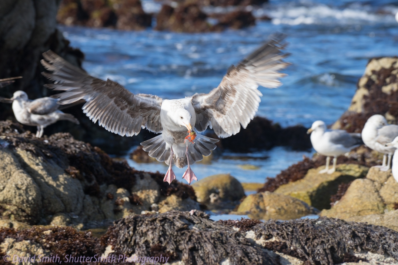 Birding-08021
