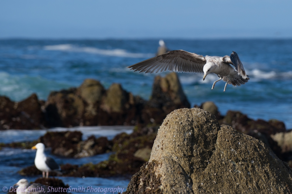 Birding-08027
