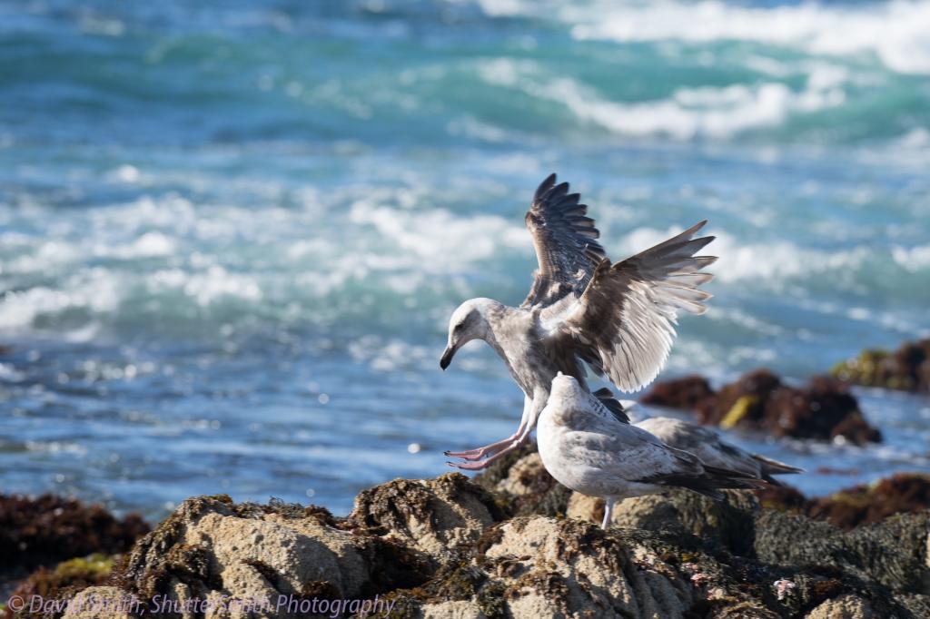 Birding-08030