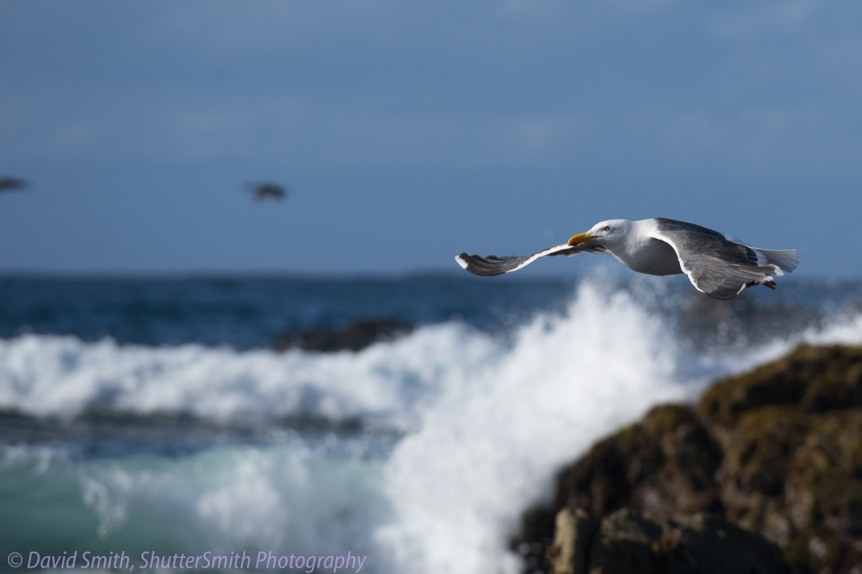 Birding-08032
