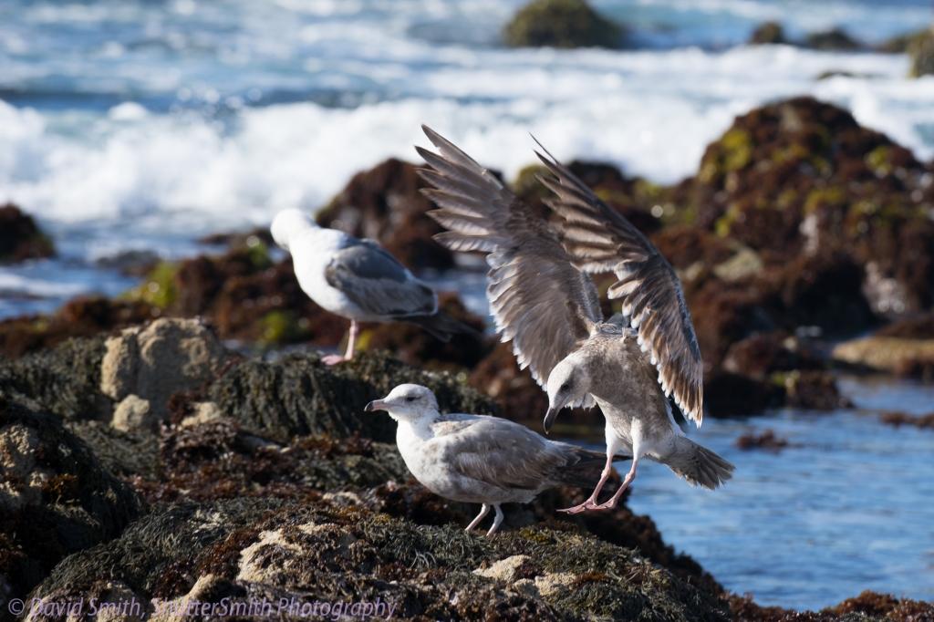 Birding-08038