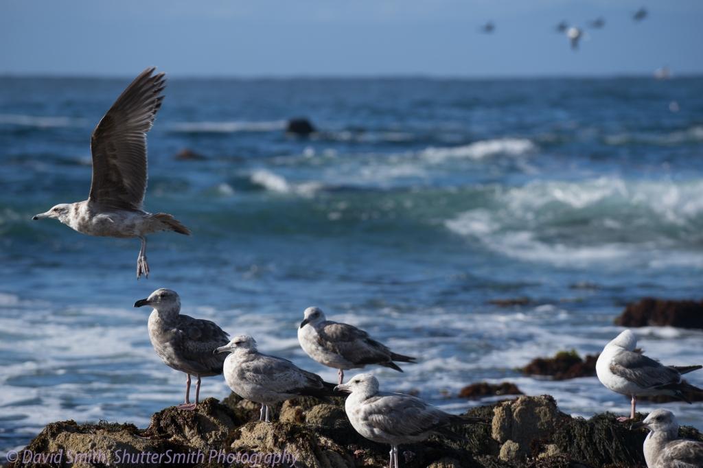 Birding-08041