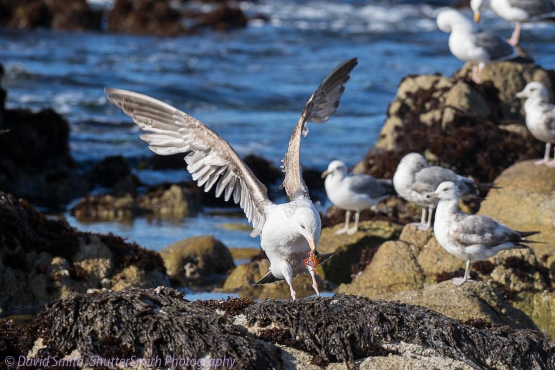 Birding3-08022